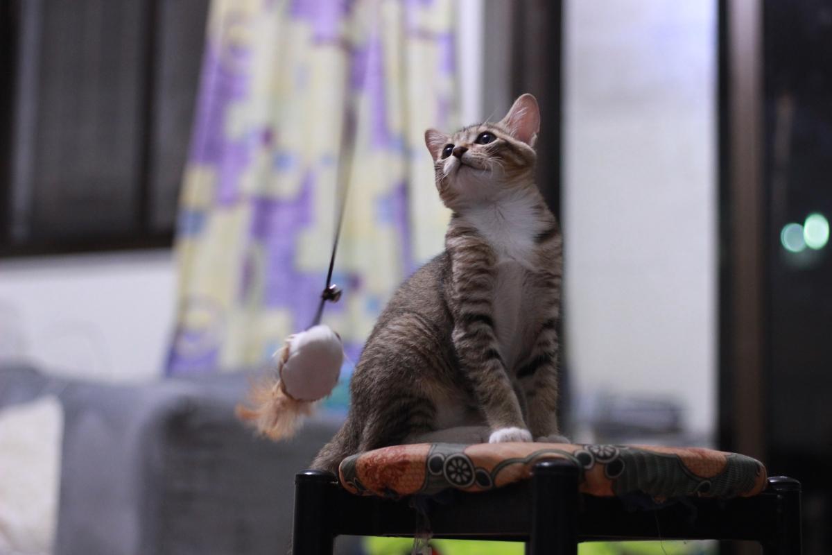一貓一世界